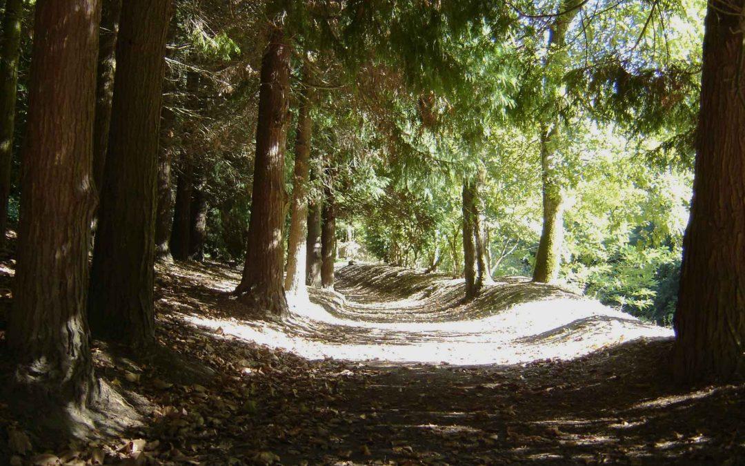 Experimentar el SER que se ES con la meditación, en entorno natural